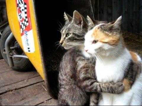 Смешные кошки видео - YouTube