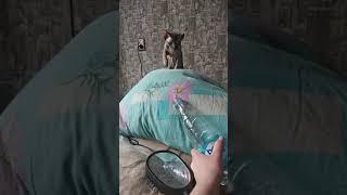 КОШКА СФИНКС VS бутылка