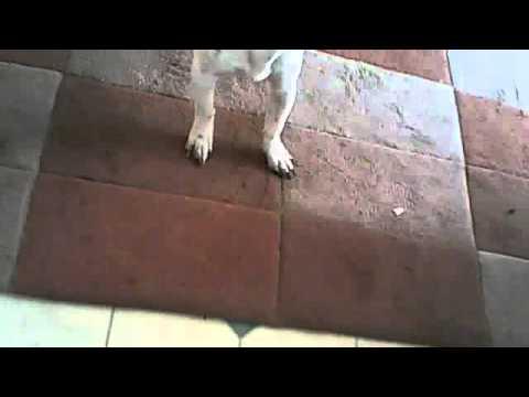 MY DOG IS STUPID!!!!!!!