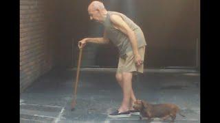 世界一忍耐強い犬。高齢となった飼い主の歩調に合わせて飼い主を気遣いながらゆっくりと散歩する。