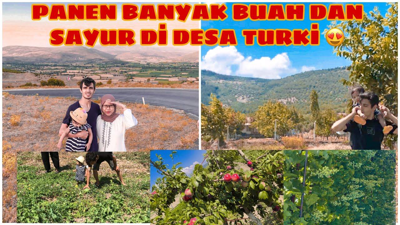 JADI PENGEN TINGGAL DI DESA   INDO-TURKI