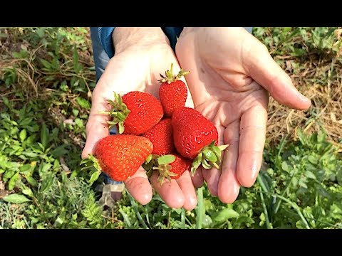 VEGETABLE GARDEN TOUR | GROWING A FOOD FOREST