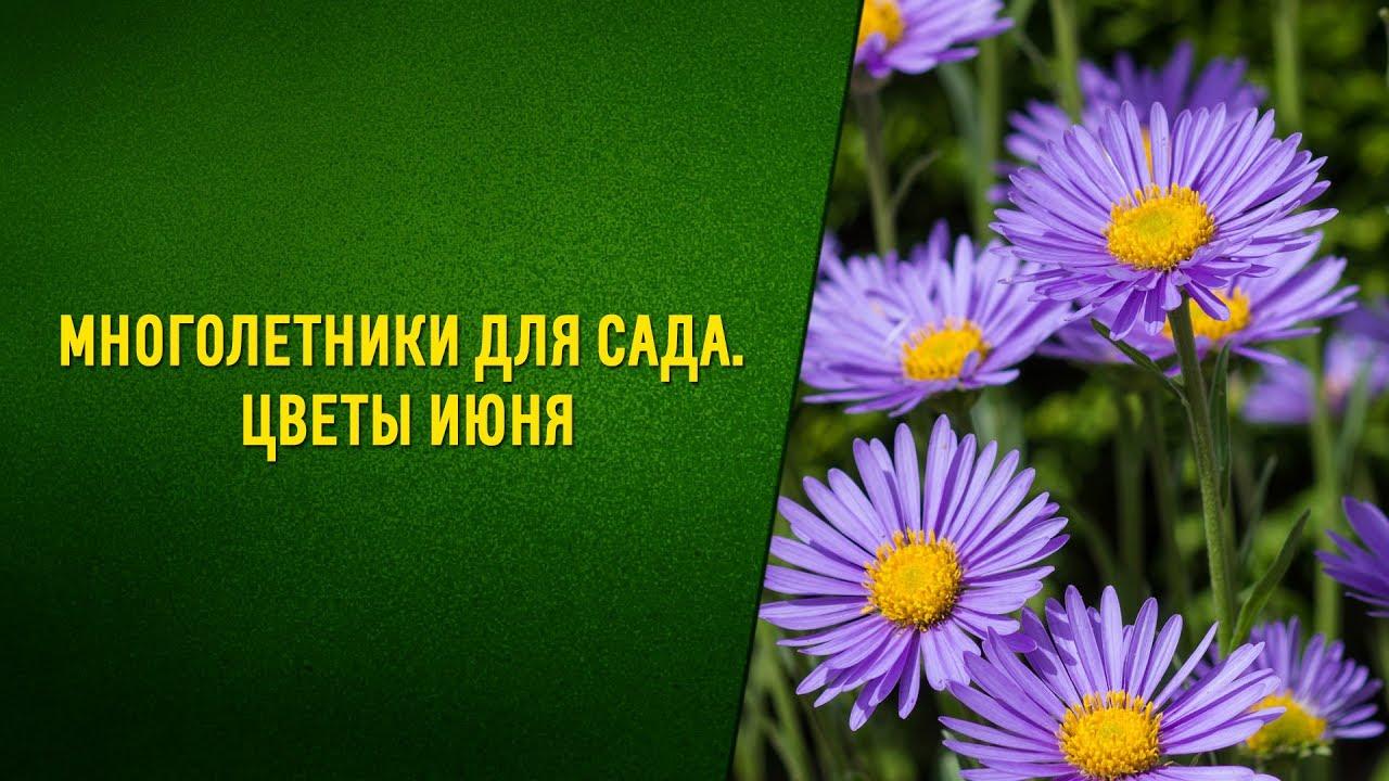 цветок замиокулькас уход и фото