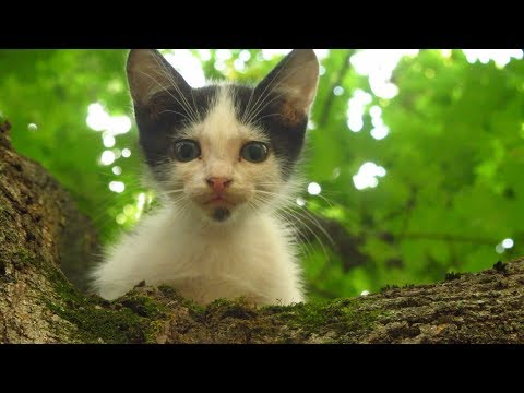 Kitten meow because it needs help to come down from the tree