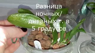 Орхидея каттлея   полив ч. 2