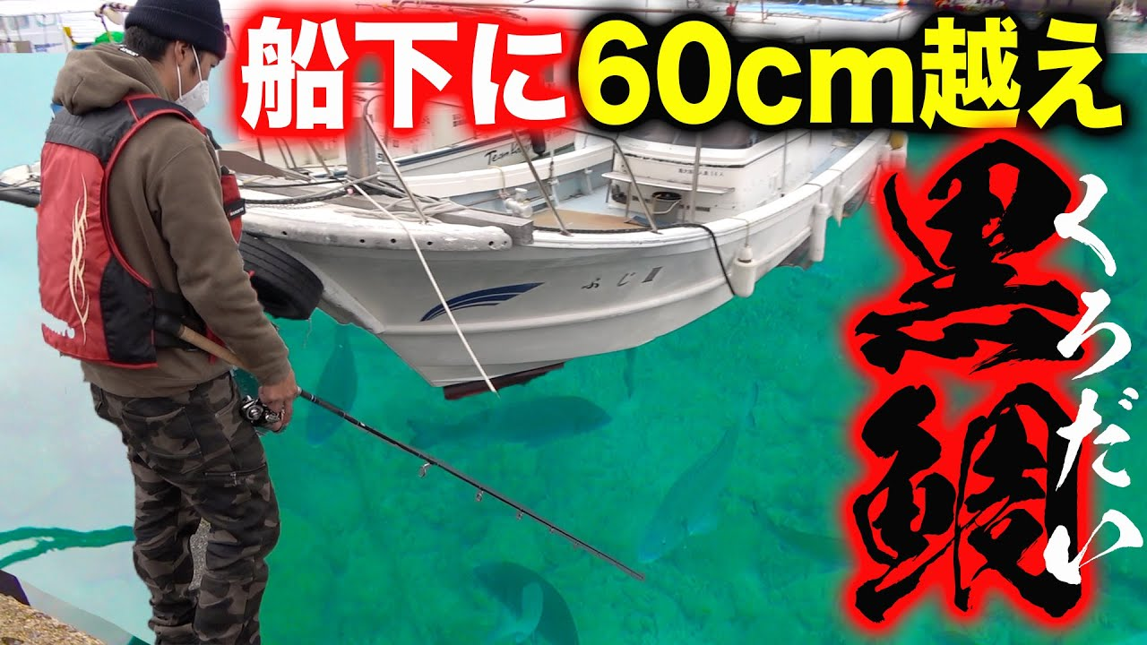 【衝撃】60オーバーの黒鯛が大量発生している港で釣り!【奄美大島遠征 #4】