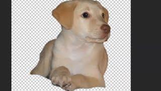 Video Tutorial Photoshop cs6  recortar imagenes con bordes perfectos