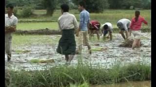 Why Organic farming fail in Burma?