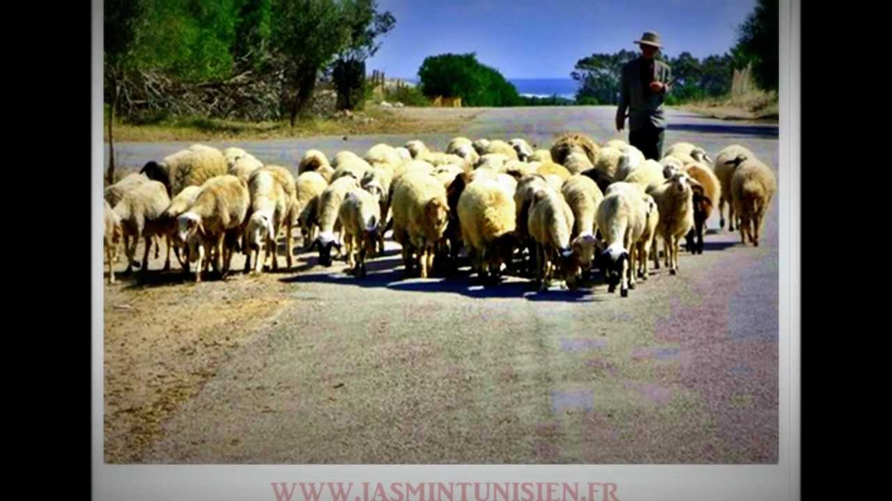 gasba tunisienne 2012