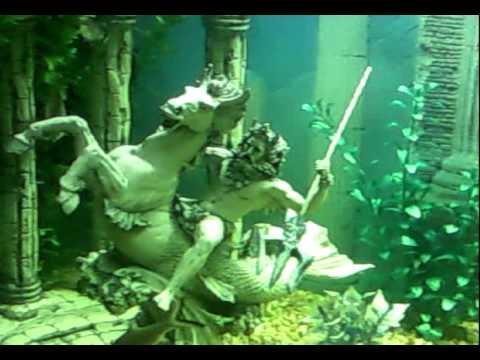 Mis peces de agua dulce acuario comunitario youtube for Peces de agua dulce para peceras