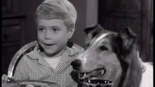 "Lassie - Episode #164 - ""Timmy, the Oil Millionaire"" - Season 5, Ep. 21 - 01/25/1959"