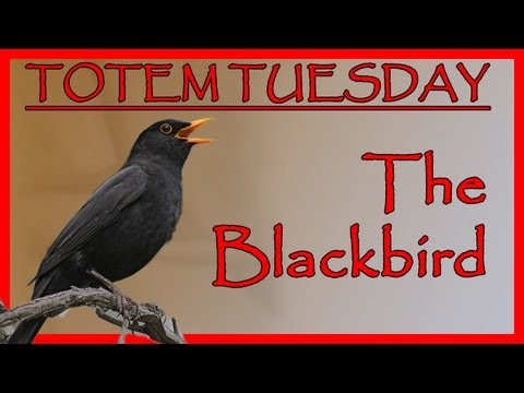 Totem T̶u̶e̶s̶d̶a̶y̶ (ahem - on Thursday!) The Blackbird