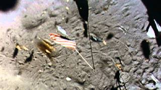 Are the flags left on the moon still there?