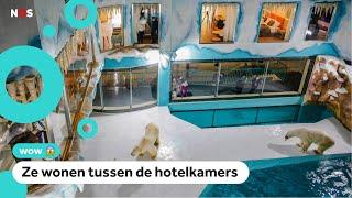 Woede over hotel met ijsberen in China