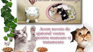 Our Lovely Rescue Pets from 2016 Romania, made with Kizoa Movie
