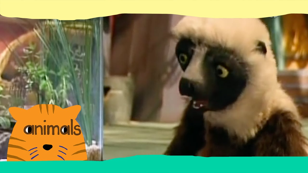 Zoboomafoo - Pets (Full Episode)