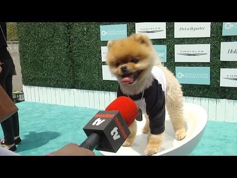 Jiff the Dog (Jiffpom) Interview 2nd Annual Super Saturday LA! Green Carpet Arrivals