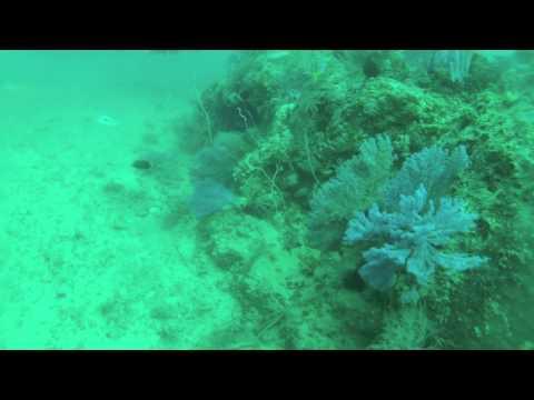Thailand 2012 - Phi Phi Islands, Dive 1