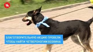 «Тест-драйв» для собак