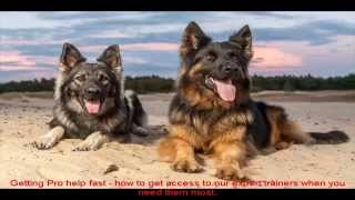 German Shepherd Attack Training Guide