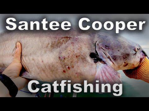 Santee Cooper Catfishing