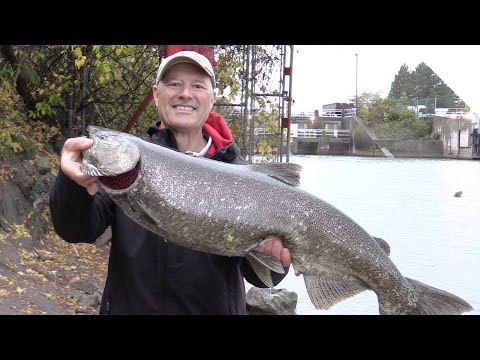 Shore Fishing In The Rain For Salmon Using Roe Bags