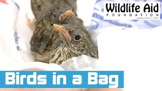 Baby Birds Rescued in a Plastic Bag!