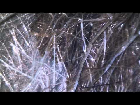 hemp fiber bioresin vacuum infusion