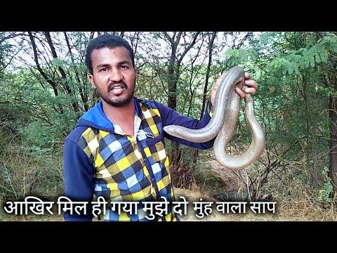 आखिर मिल ही गया मुझे दो मुंह वाला साप | After all I got a two-headed snake.. My mobile 9209640006