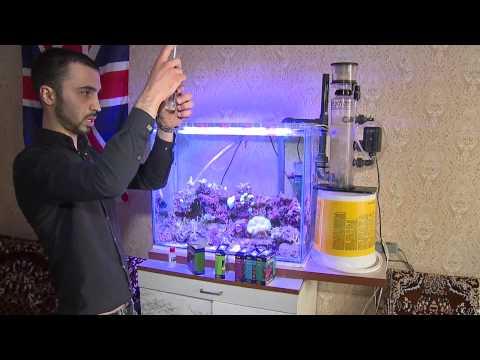 Кораллы в домашних условиях