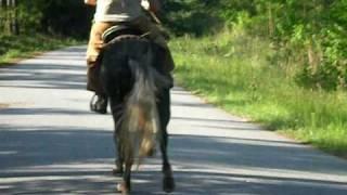 RACKING HORSE FOR SALE DAPPLE GRAY