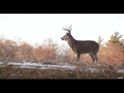 Illinois Rut Hunt | Land Of Whitetail TV