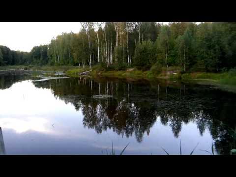 в вотчину водяного   Брянский лес