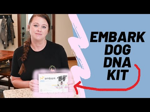 Embark Dog DNA Test - Full Review