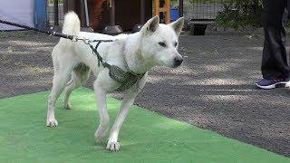 紀州犬,Kishu Inu(dog),和歌山城公園動物園,Zoo next to Wakayama castl...