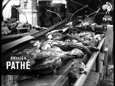 Your Fish At Stake (1960)
