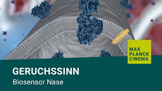 Geruchssinn - Biosensor Nase