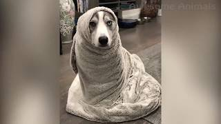 Awesome Funny Animals 2019