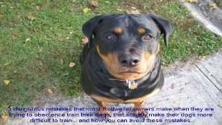 Obedience Training For Rottweilers Guide