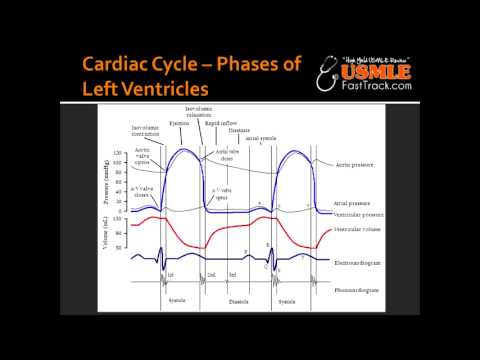 Cardiac Cycle Phases Of Left Ventricles
