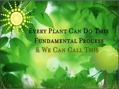 photsynthesis song Learn about energy and photosynthesis with flocabulary's educational rap song and lesson plan.