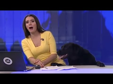 Dog Interrupts News Blooper