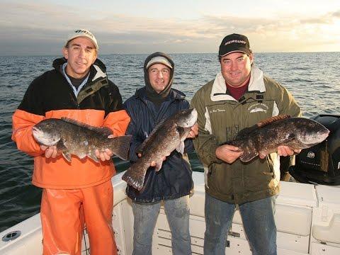 Blackfish tautog fishing newport ri youtube for Fishing newport ri