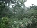 La Ceiba rain, September 08