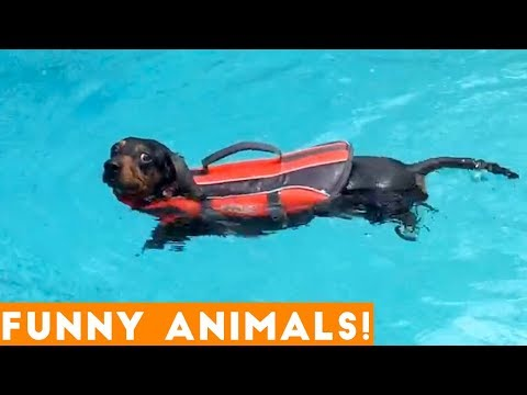 Funniest Pets & Animals of the Week Compilation December 2018 | Funny Pet Videos