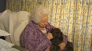 Волонтёры в Австралии привозят к пожилым пациентам любимых животных (новости)