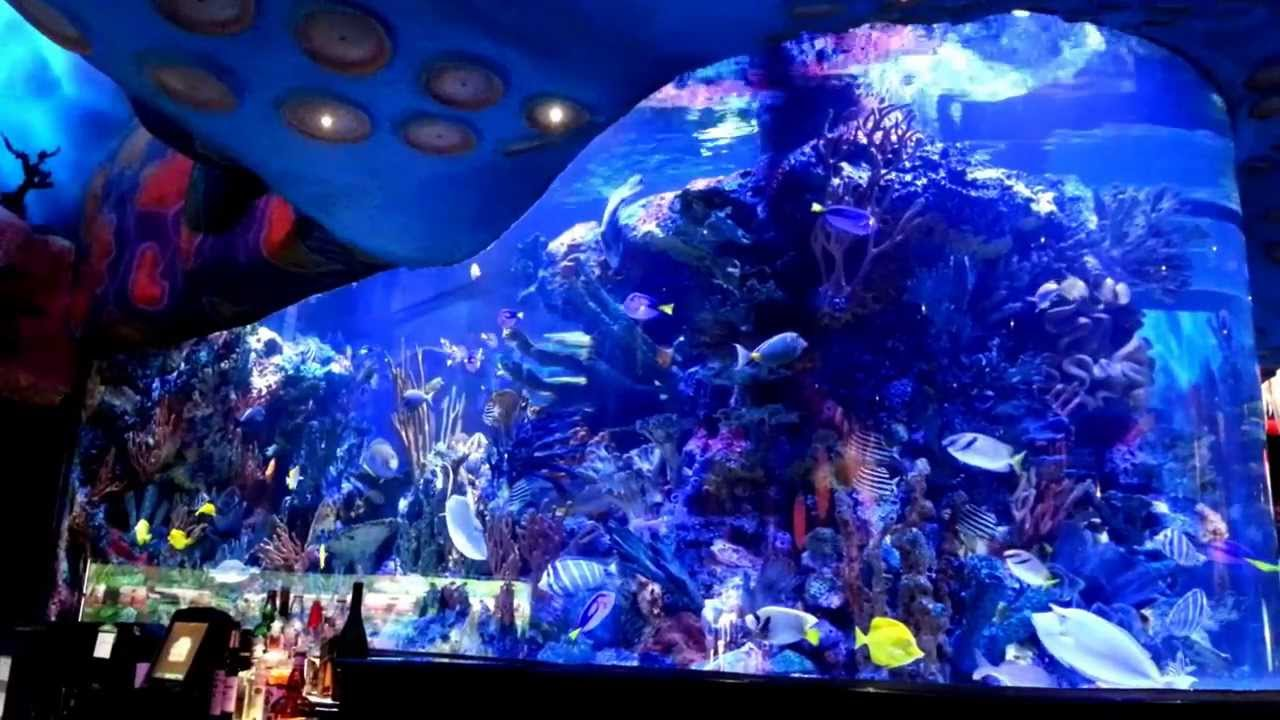 T rex aquarium disney world downtown disney youtube for Disney dining reservations t rex