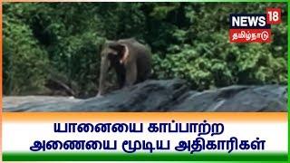கேரளாவில் ஒற்றை யானையை காப்பாற்ற அணையை மூடிய அதிகாரிகள்   Dam shutter closed to rescue elephant