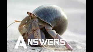 Hermit Crab FAQ | Answers