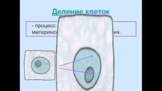 Питание, дыхание и деление клеток